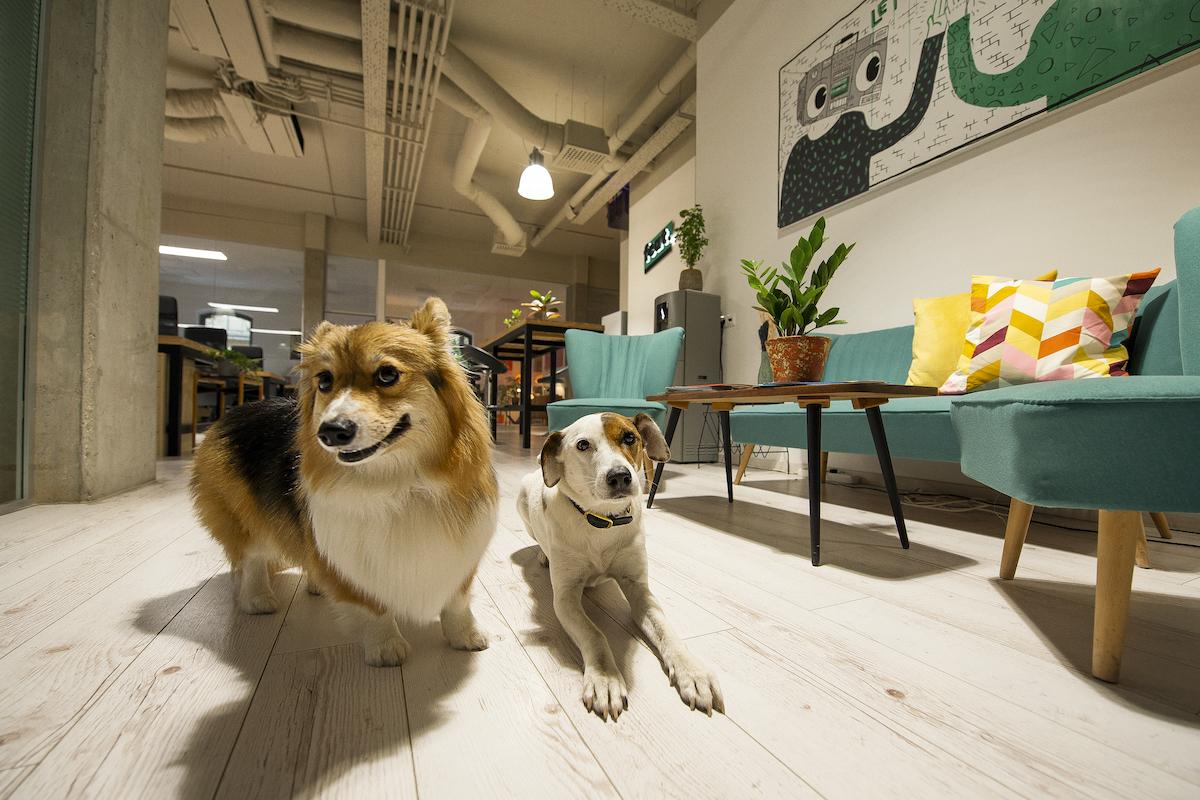 feat. agency office dogs